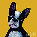 Boston Terrier On Yellow by Dale Moses