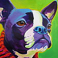 Boston Terrier - Ridley by Alicia VanNoy Call
