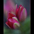 Botanic by Annie Snel