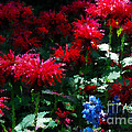 Botanic Garden Abstract by Nancy Mueller