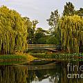 Botanic Garden Bridge At Dusk by Nancy Mueller
