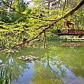 Botanical Garden Lake Spring View by Brch Photography