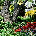 Botanical Landscape 2 by Eunice Miller