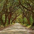 Botany Bay Road On Edisto Island by Melanie Snipes