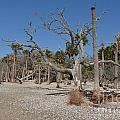 Botany Beach by John-Leon Halko