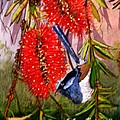 Bottle Brush And Wren by Sandra Sengstock-Miller