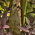 Bottle by Salman Ravish