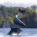 Bottleneck Dolphin Playing by Don Kuing