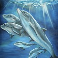 Bottlenose Dolphins by Thomas J Herring
