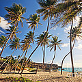 Bottom Bay Beach In Barbados Caribbean by Matteo Colombo