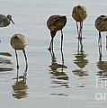 Shorebirds 1 by Bob Christopher