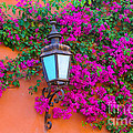 Bougainvillea And Lamp, Mexico by John Shaw