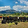 Boulder Beef by Lynn Bauer