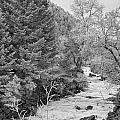 Boulder Creek Winter Wonderland Black And White by James BO Insogna