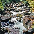 Boulder Stream by Lydia Holly