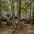 Boulder Woods by Ronald Grogan