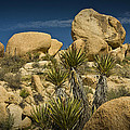 Boulders In The Joshua Tree National Park by Randall Nyhof