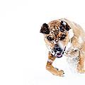 Bounding In Snow by Thomas R Fletcher