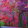 Bountiful Color by Dennis Baswell