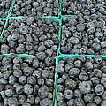 Bounty Of Blueberries by Thomas Shockey
