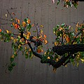 Bouquet From Autumn Leaves.three. by Viktor Savchenko