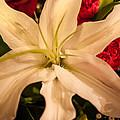 Bouquet  by Mechala Matthews