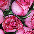 Bouquet Of Pink Roses by Dora Sofia Caputo Photographic Design and Fine Art