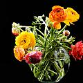 Bouquet Of Ranunculus by Zina Zinchik