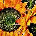 Bouquet Of Sunflowers by Danielle  Parent