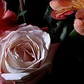 Bouquet With Rose by Joe Kozlowski