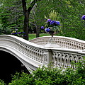 Bow Bridge Flower Pots - Central Park N Y C by Christiane Schulze Art And Photography