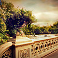 Bow Bridge View by Jessica Jenney