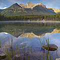 Bow Range And Herbert Lake Banff by Tim Fitzharris