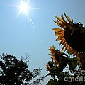 Bowing To The Sun by Janice Byer