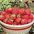Bowl Of Berries by E Faithe Lester