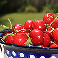 Bowl Of Cherries In The Garden by Carol Groenen