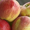Bowl Of Royal Gala Apples by Sharon Talson