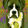 Boxer 20130126v2 by Wingsdomain Art and Photography