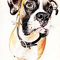 Boxer Dog by Peter v Quenter