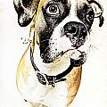 Boxer Dog Poster by Peter v Quenter