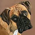Boxer Dog by Sarah Dowson