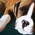 Boxer by Michele Turney