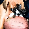 Boxer Puppy Cuteness by Peggy Franz