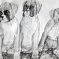 Boxer Puppy Dog Poster Print by Olde Time  Mercantile
