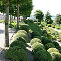 Boxwood Garden Globes by Christiane Schulze Art And Photography