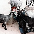 Boy Surrounded By Hungry Goats by Jim Fitzpatrick