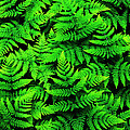 Bracken Ferns by Randy Beacham