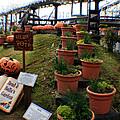Brad And Bellas Garden by Doc Braham