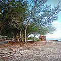 Bradenton Beach  Pine Trees by Lou Ann Bagnall