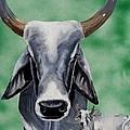 Brahma Bull by Debbie LaFrance